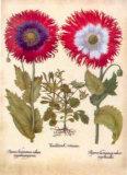 L'Herbier VIII Poster von Besler Basilius
