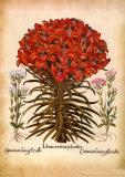 L'herbier 7 Affiches par Besler Basilius