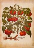 L'Herbier I Art by Besler Basilius