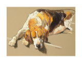 Hound in a Kennel Collectable Print by Andre Pater