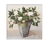 Dogwood Print by Galley 