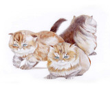 Puppies and Kittens II Prints by D. Patrian