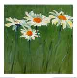 White Daisies Prints by Teo Malinverni