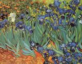 Blå iris, Saint-Remy, ca. 1889|Irises, Saint-Remy, c.1889 Posters av Vincent van Gogh
