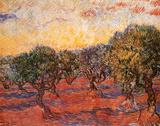 Le champ d'oliviers Poster par Vincent van Gogh