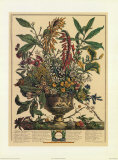 January Prints by Robert Furber