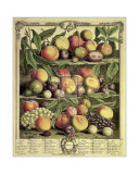 Fruits of the Season Autumn Posters by Robert Furber