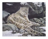 Awake Snow Leopard Print by Alan Sakhavarz