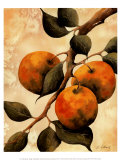 Italian Harvest, Oranges Posters by Doris Allison