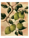 Italian Harvest, Limes Posters by Doris Allison