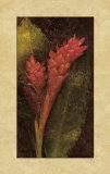 Ginger Print by John Seba