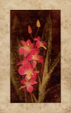 Orchid Prints by John Seba