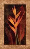 Heliconia Prints by John Seba