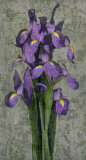 Purple Iris Art by John Seba