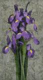 Purple Iris Posters by John Seba