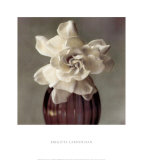 Gardenia in Purple Vase Prints by Carnochan