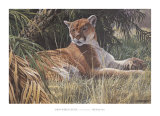 Last Sanctuary- Florida Panther (detail) Posters by Seerey & Lester
