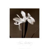 Iris III Plakater af Tom Artin