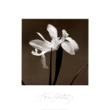 Iris III Print by Tom Artin