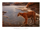 Canyon Creek- Cougar (detail) Posters by John Seerey-Lester
