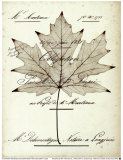 Maple Document Prints by Booker Morey