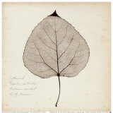 Cottonwood Leaf Poster by Booker Morey