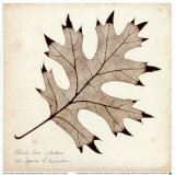 Black Oak Leaf Print by Booker Morey