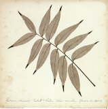 Pistacia Leaf Prints by Booker Morey