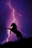Blitz und Silhouette eines Pferdes Kunstdrucke