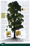 Anatomy of a Tree poster