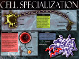 Cell Specialization Prints