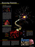 Connaissance des neurons Posters