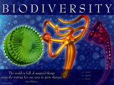 Biodiversity Prints