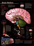 Matières cérébrales Affiche