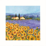 Lavender and Sunflowers, Provence Print by Hazel Barker