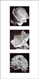 Flower Panel I Prints by Bill Philip