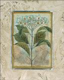 Du Jardin II Art by  Augustine (Joseph Grassia)