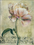 Floral Blush II Prints by Dennis Carney