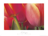 Tulips Posters by Brian Twede