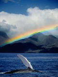 Rainbow over Breaching Humpback Whale Photographic Print by Jeff Vanuga