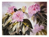 Rhodies II Giclee Print by Joan Grout