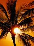 Palm Tree and Sunset Photographic Print by Craig Aurness