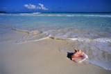 Conch Shell on Quiet Beach Fotografisk tryk af Randy Faris