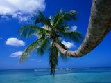 Palm Tree and Caribbean Sea Photographic Print by Ralph Clevenger