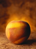Nectarine Photographic Print by Duncan Smith