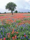 Field of Red and Blue Flowers Photographic Print by Jim Zuckerman