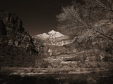 Mountains and Tree from Valley Floor Photographic Print