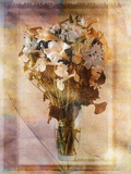 White Flowers in a Vase Photographic Print by Colin Anderson