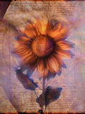 Sunflower and Text Photographic Print by Colin Anderson