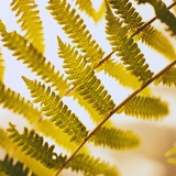 Close-up of a Fern Frond Photographic Print by Brian Yarvin